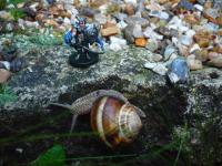 Warsgar encounters Roger